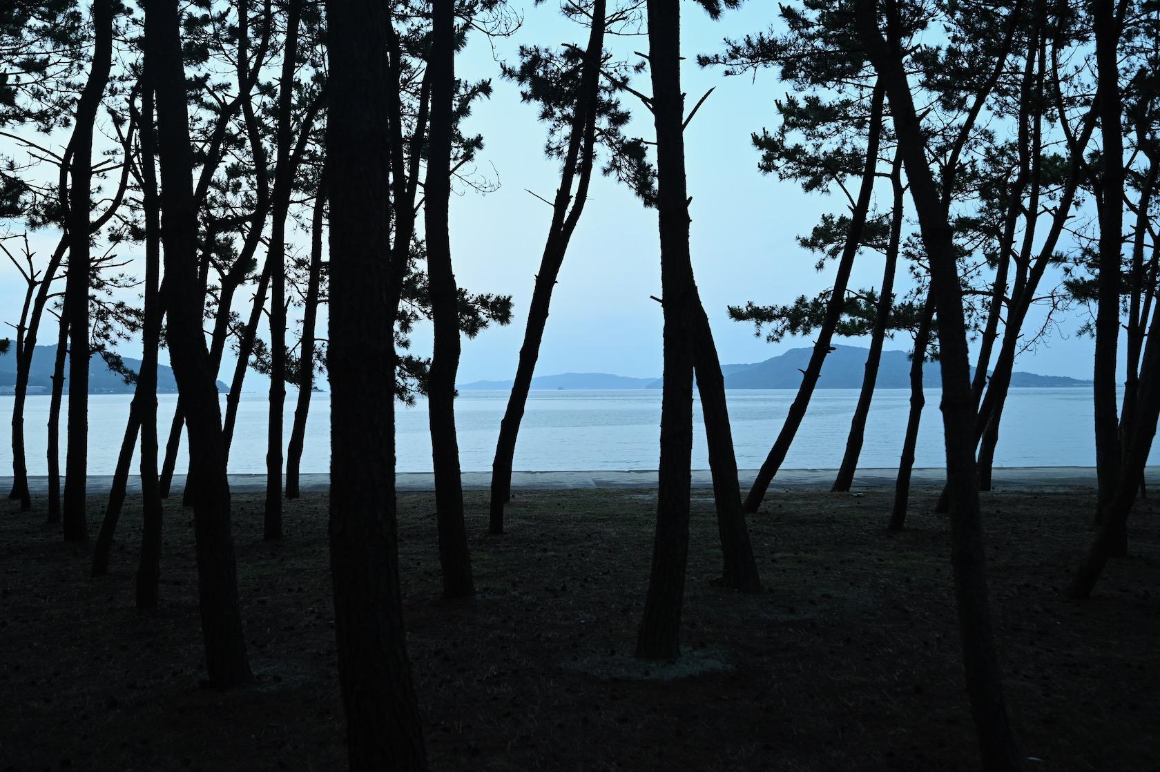 長垂海浜公園の松林