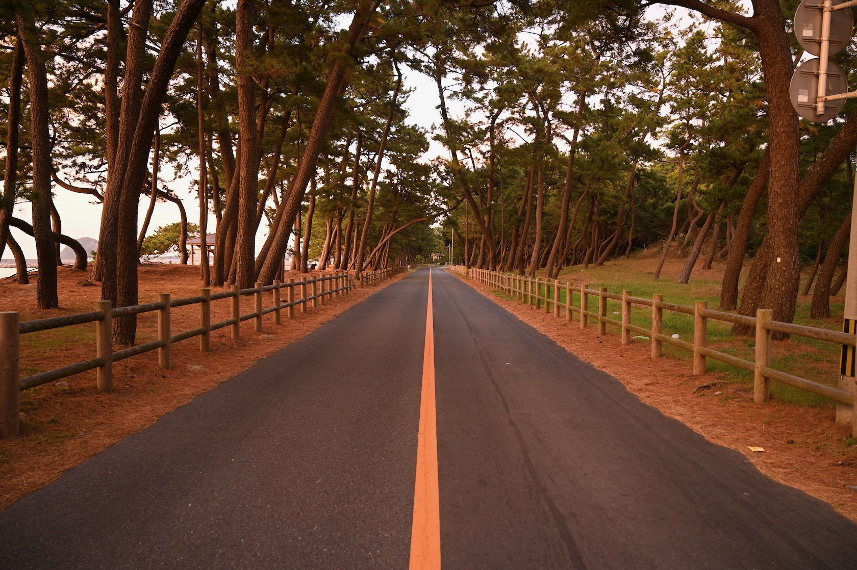 夕日に染まる宗像の道路